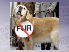 Stop the sale of dog fur with Marc Jacobs