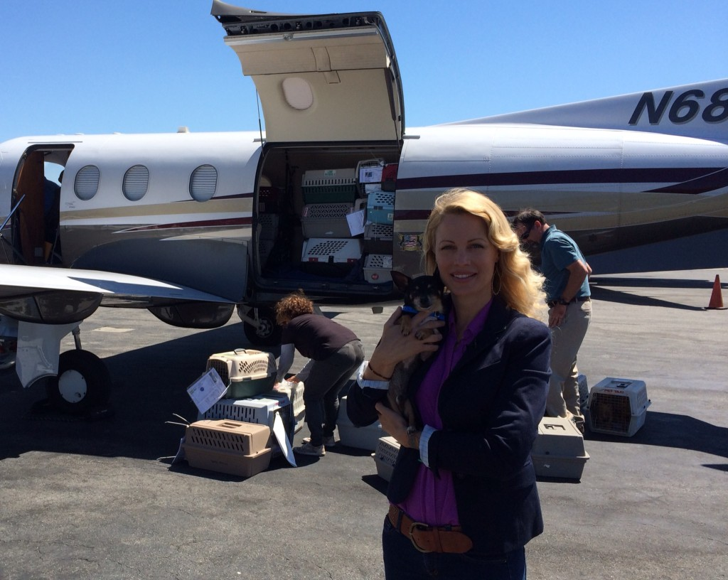 Eastwood Ranch and Alison Eastwood supporting Wings of Rescue