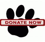 Donate and help the cats of San Bernardino