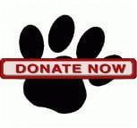 Donate and help the cats of San Bernardino
