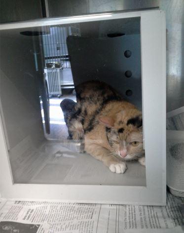 Donate to Help the Cats of San Bernardino
