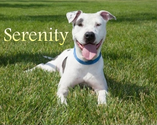 Samadhi Legacy Foundation Adoptable Dog - Serenity