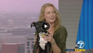 Alison Eastwood on KABC7