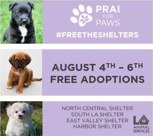 Free The Shelter