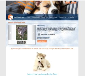 Visit Foster Fur Kids Website Right Now!