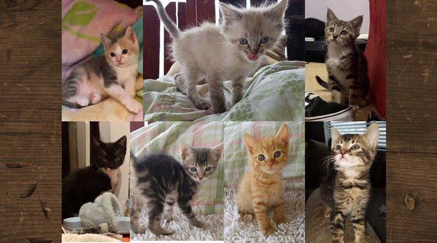 Adopt A Kitten!