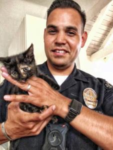 LAs Finest adopts kitty